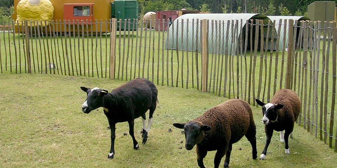 Tentoonstellingsoverzicht 'Happy Forest', 2005